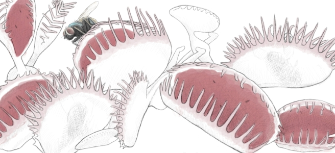 """Line drawing of a venus flytrap, the only color is red in the open traps, and a red tinge to the """"teeth"""". A fly perches on it, lightly colored with blue, green, and cream tones."""