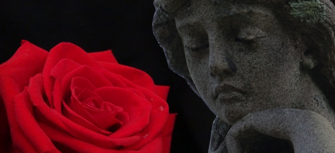 A memorial statue, smooth marble with a shield lichen perched over one ear like a flower, gazes at a rose with a few raindrops on it, against a black background.